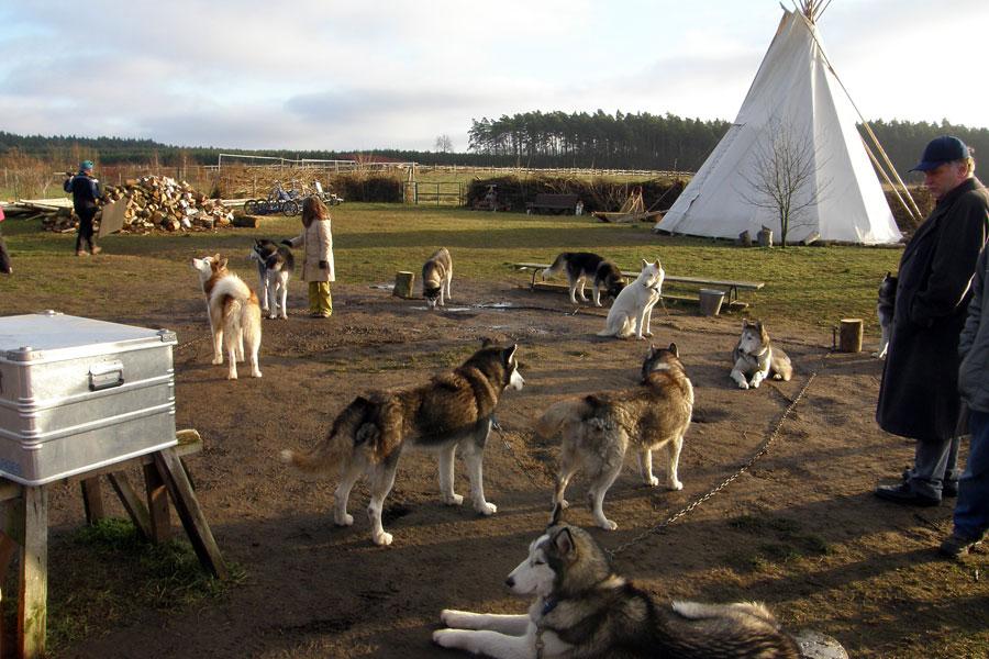 Husky Hof mit Indianerzelt